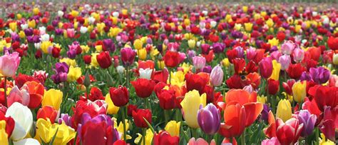 flower information and pictures 10 interesting facts about flowers 10 interesting facts