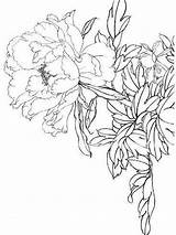 Coloring Flower Pages Peony Flowers Drawing Printable Line Template Mycoloring sketch template
