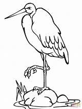 Coloring Stork Standing Leg Drawing sketch template