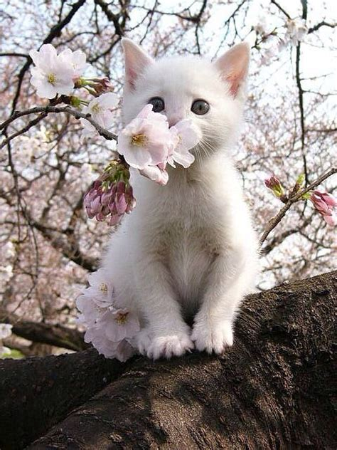 spring cat pictures   images  facebook