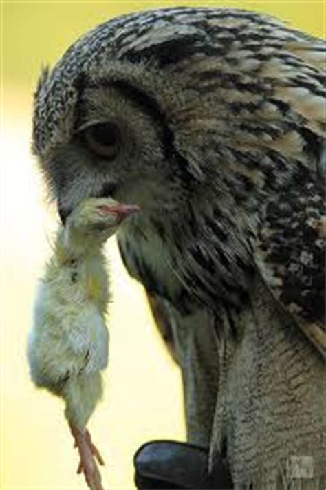 what do owls eat what do owls eat what do types of owls eat