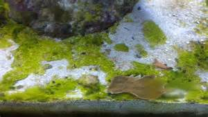 Reef Addicts - Cyanobacteria - what is it and how can I ...