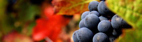 nettoyer canapé tissus apprenez les différentes qualités des vins avec
