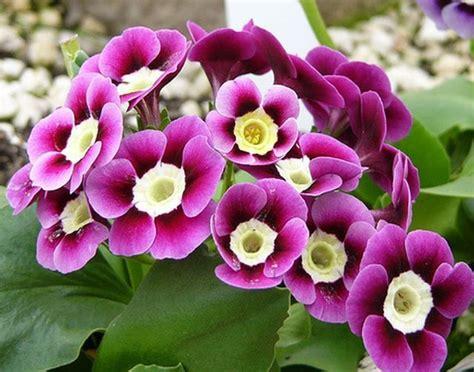 รูปดอกไม้สวยๆ - ค้นหาด้วย Google