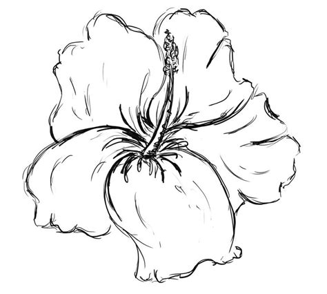 1000 Ideas About Hibiscus Flower Drawing On Pinterest