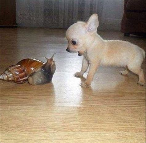 This is either the largest snail or the smallest dog I've ...
