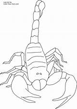 Scorpion Coloring Pages Printable Scorpio Print Invertebrate Front Drawing Getcoloringpages Coloringbay Bestcoloringpagesforkids sketch template