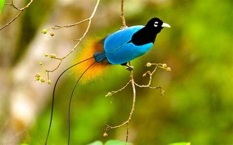 birds wallpapers best wallpapers