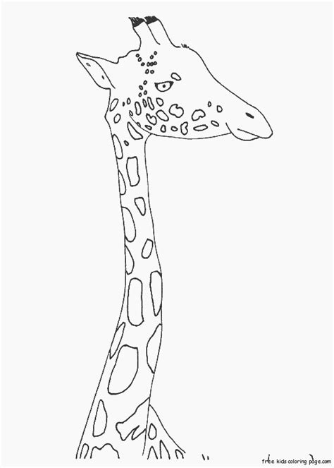 printable animal zarafa zoo coloring pages  kidsfree