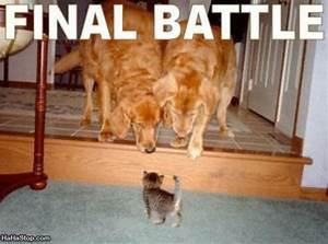 Tough Kitten Picture Lots Of Jokes
