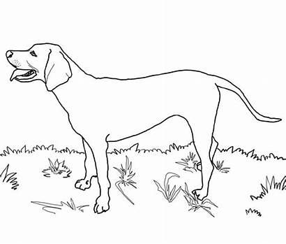 Coloring Dog Dane Cartoon Ages Azcoloring Via