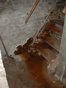Nasse Wände Im Haus : nasse keller feuchte w nde feuchtigkeit sch digt ihr ~ Lizthompson.info Haus und Dekorationen