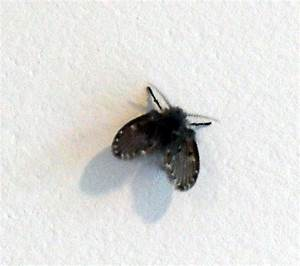 Bad day going down for Tiny moths in bathroom