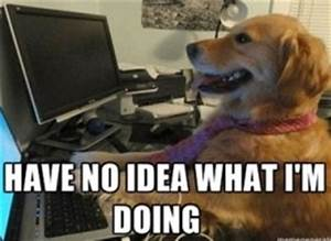 'I Have No Idea What I'm Doing' Meme Dog's Owners Know ...