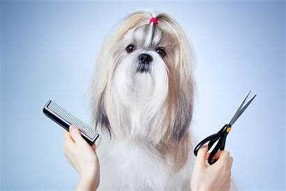 Grooming Dog Wallpapers