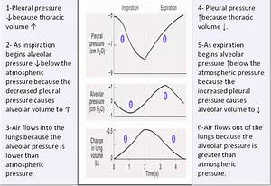 8   Pressures And Volumes Changes During The Respiratory