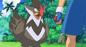 【Issue #1】: Favourite Bird Starter?   Pokémon Amino