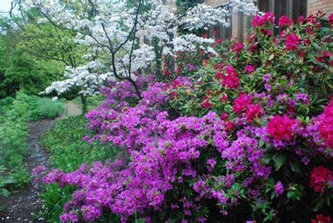 flowering shrubs for shade shrubs for shade gardens
