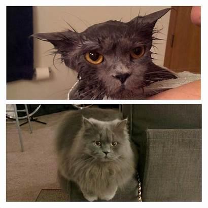 Cat Dry Wet Vs Funny Bath Before