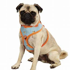 Zack & Zoey Flutter Bugs Dog Harness - Bumble Bee   BaxterBoo