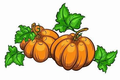 Pumpkin Pumpkins Thanksgiving Clipart Transparent Clip Background