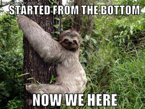 Cute Sloth Meme - sloth slothmeme sloth memes pinterest sloth and animal
