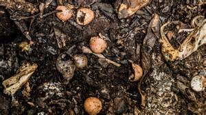 compost cuisine file food scraps compost jpg wikimedia commons