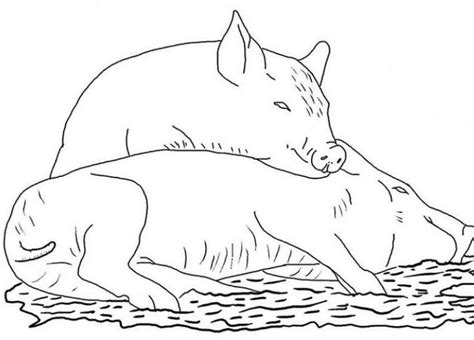 pigs Adult coloring pages Farm animal coloring pages