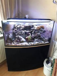 Haus Kaufen Quakenbrück : 132 meerwasseraquarium komplett aquarien und zubeh r tieranzeigen seite 4 komplett ~ Orissabook.com Haus und Dekorationen