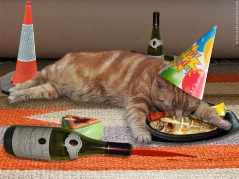 cat birthday drunk happy birthday another birthday another day of overindulgence happy birthday