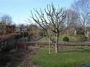 Apfelbaum Schneiden Sommer : pin apfelbaum im sommer lizenzfreie bilder mev verlag on ~ Lizthompson.info Haus und Dekorationen