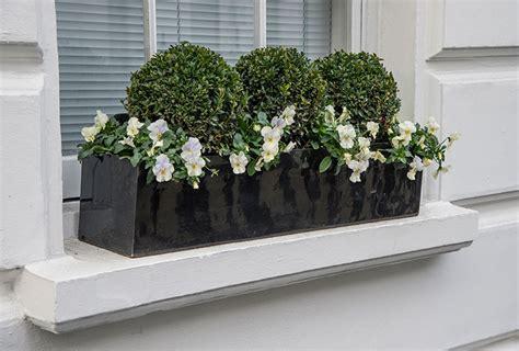 exterior plants window boxes london