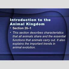 Introduction To The Animal Kingdom