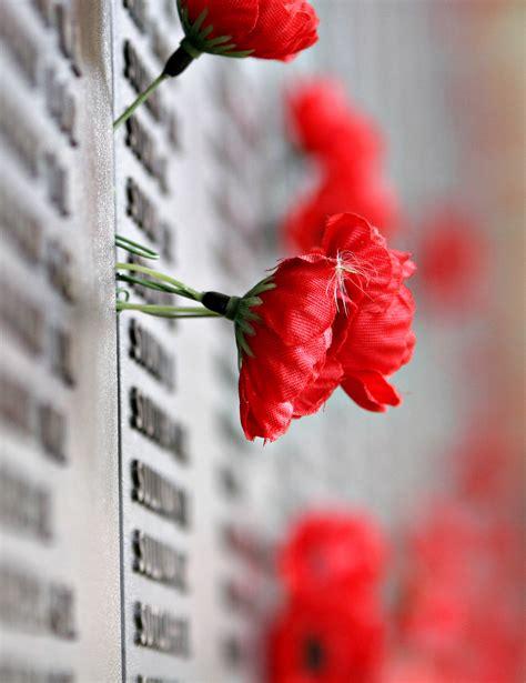 memorial poppy flower 圖片搜尋 poppy