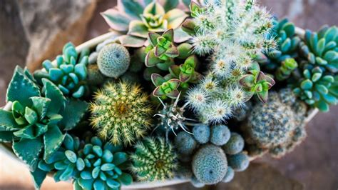 Succulents and Cacti - QR Learning Platform