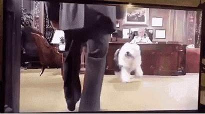 Dog Punch Punching Sucker Gifs Dogs End