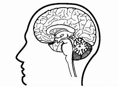 Psychology Brain Coloring Pages Sciences Science