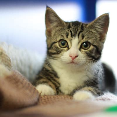 Cats  Battersea Dogs & Cats Home