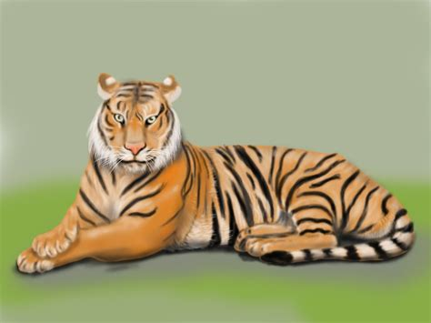 learn   draw  bengal tiger wild animals step
