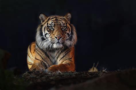 nature wildlife world photography organisation