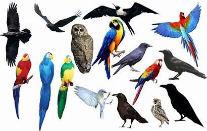 Bird Burung Bahan Edit Gambar Birds Deviantart