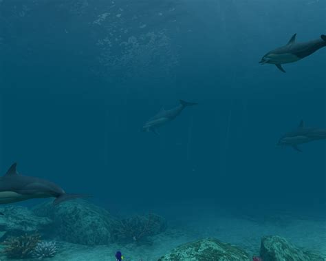 Dolphins 3d Screensaver And Animated Wallpaper - moving dolphin wallpaper wallpapersafari