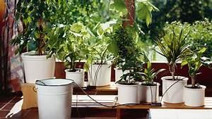 Pflanzen Automatisch Bewässern : automatische und bequeme bew sserung drossel balkon 1 pinterest ~ Frokenaadalensverden.com Haus und Dekorationen