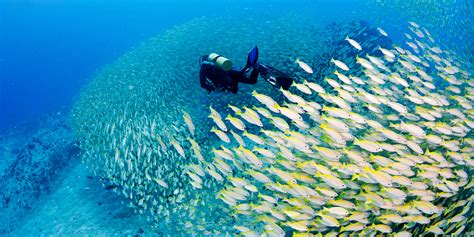 seychelles the best scuba diving in the world tropical