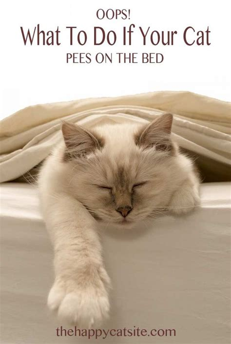 Stop Cat From On Bed by Cat On Bed Covers Why They Do It And How To Stop