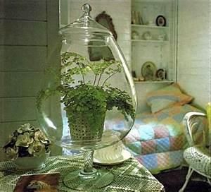 Sukkulenten Im Glas Pflanzen : blumen im glas pflanzen wohn design ~ Eleganceandgraceweddings.com Haus und Dekorationen