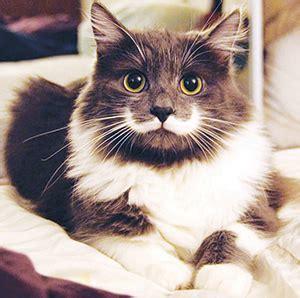 hamilton the cat hamilton the cat tenpenny s pins of animals