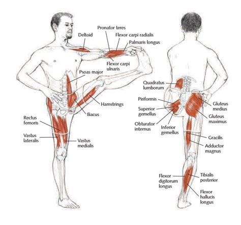 Boat Pose Weak Hip Flexors by What Are Hip Flexors Doc Health Tips