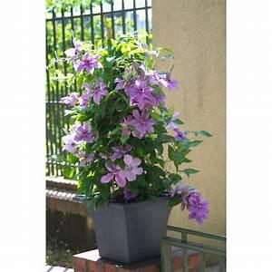 Plantes Grimpantes Pot Pour Terrasse : coffret plantes et arbustes terrasses et balcons ~ Premium-room.com Idées de Décoration