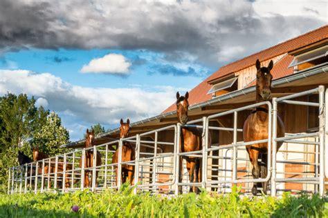 Vom Traum, Den Eigenen Pferdestall Zu Bauen Stgeorg